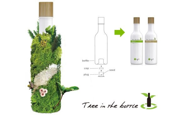 Oright-Tree-in-the-bottle-21